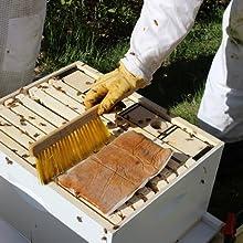 bee feed