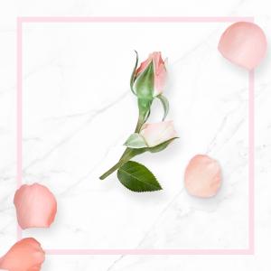 Eau de rose de Damas bio