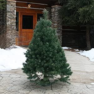 Hallmark Scotch Pine 3-4' Christmas Tree