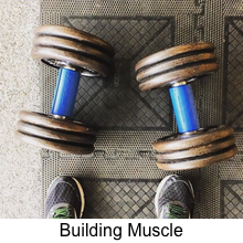 building muscle