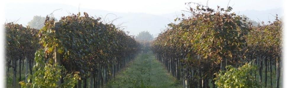 Vigneto; Materie Prime; Aceto Balsamico di Modena IGP; Uve; Balsamico di qualità; Balsamico;