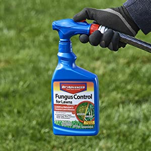 How to Use Fungus Control for Lawns on turf, plants and mushrooms as a immunox treatment