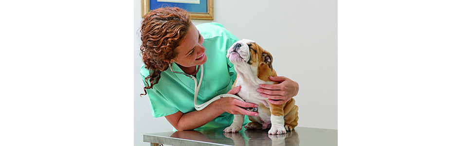 Vet, Health, Pet, Illness
