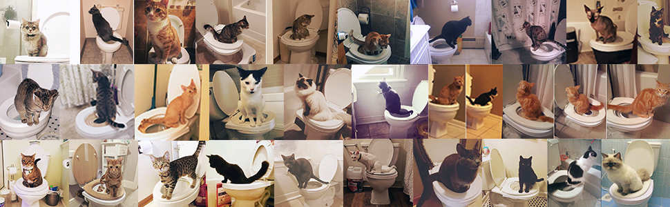 cat toilet training kit toilets seat litter tray trainer for cats pads train potty kitty loo box
