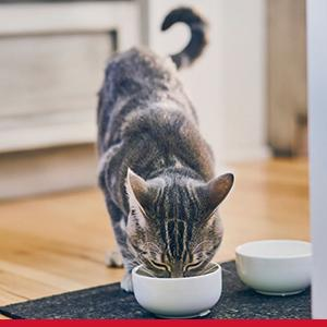 Biology-Based Nutrition for Every Cat