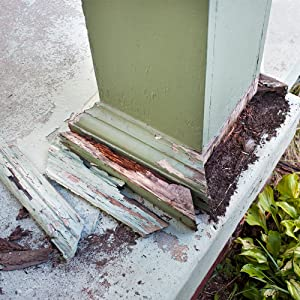 termite damage, termites, ants, carpenter ants, insect control, wood wasps, carpenter bees, terro
