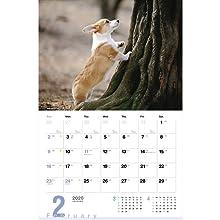 カレンダー2020 ウェルシュ・コーギー