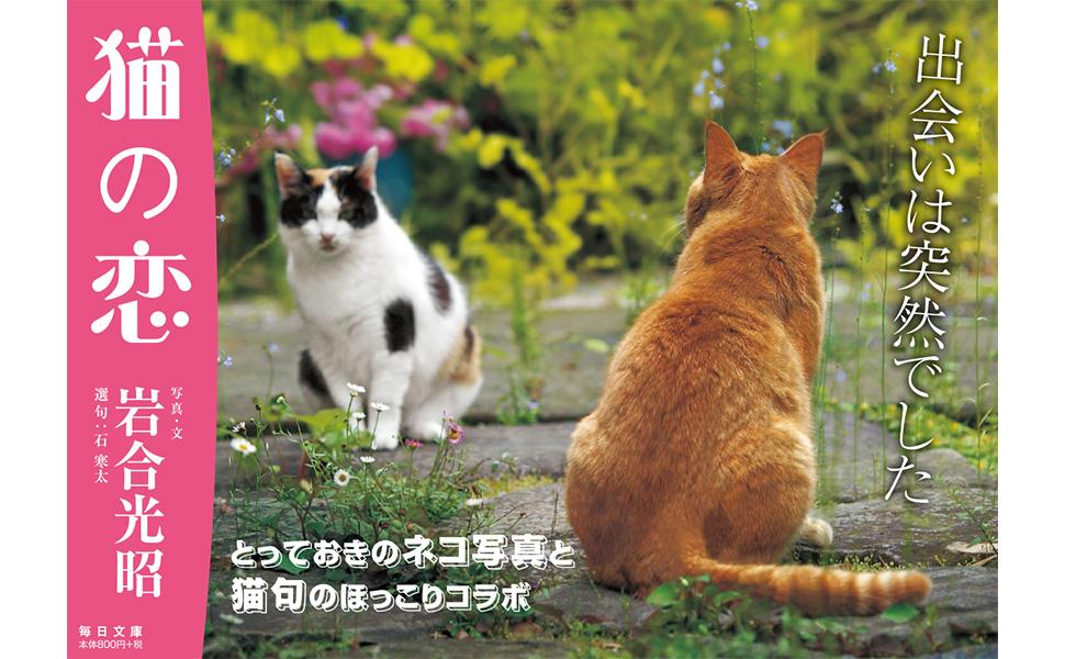 猫の恋拡材画像