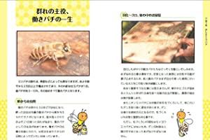 第1章 おしえてミツバチ
