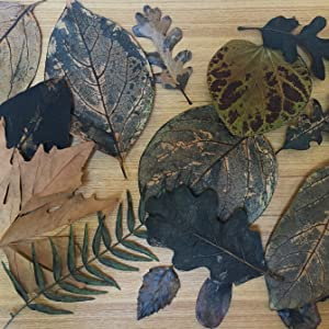 nature printing;leaf printing;art;artistic picture boats;picture book nature riddles;leaves;fall