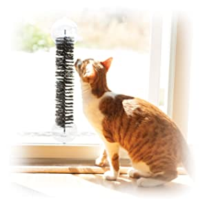 interactive;ball;toy;kitty;cat;feline;perch;sill;window;mount;suction;brush;play;swat;ball;post;