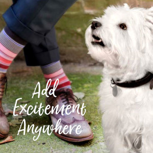 Add Excitement Anywhere, Chicken Dog Food, Beef Dog Food, Food for Small Dogs, Small Breed