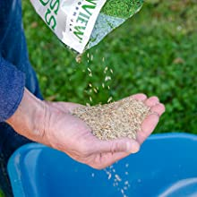 Greenview, grass seed, lawn seed, best grass seed, sunny grass seed, how to plant grass seed