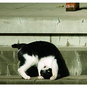 必死すぎるネコ