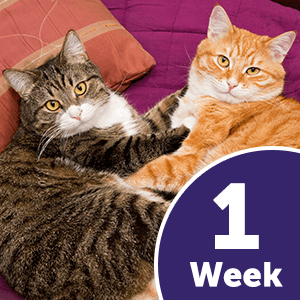 sports shoes 17917 0478a FELIWAY MultiCat has been proven to significantly reduce conflict between  household cats in one week