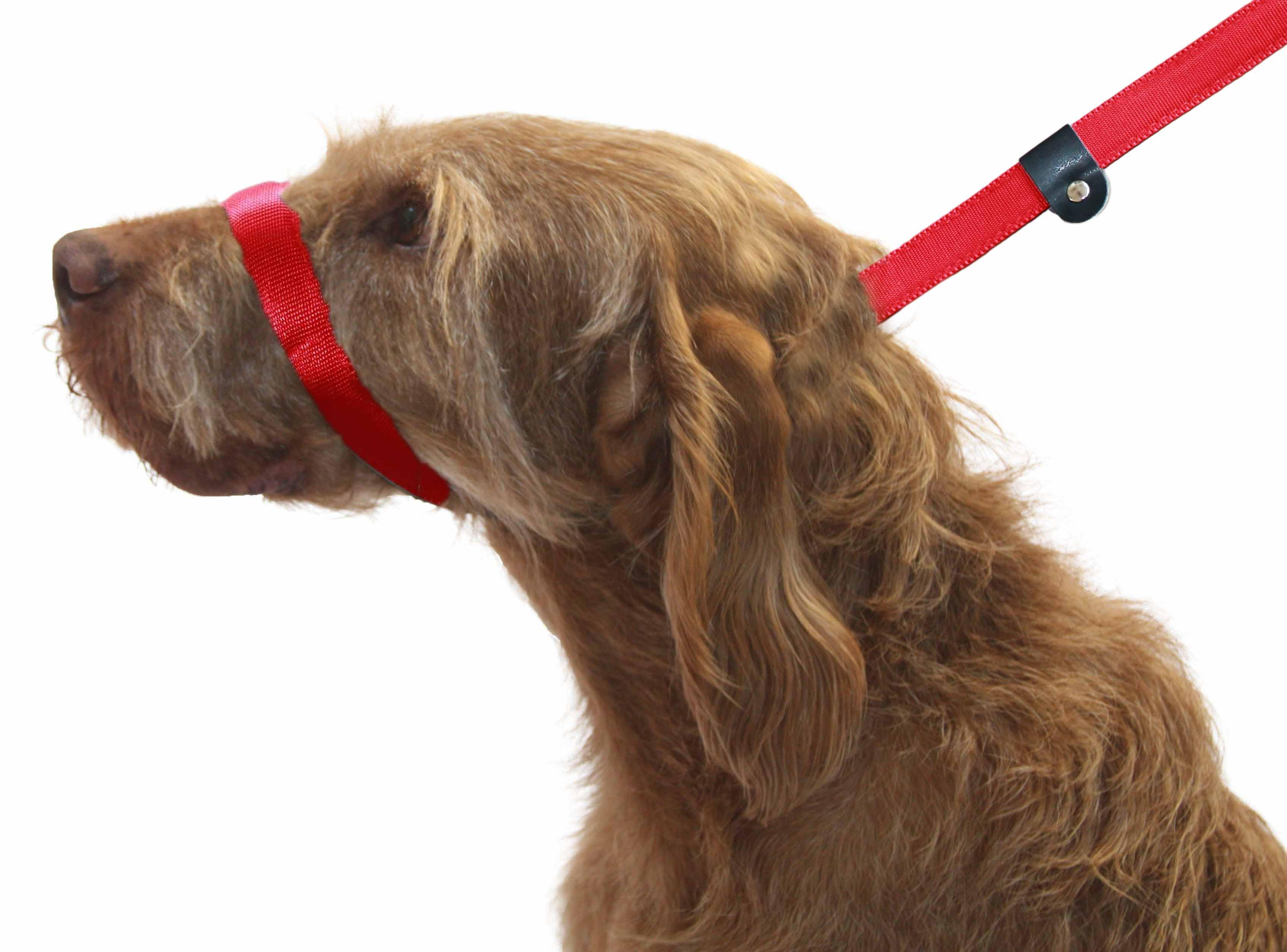 How To Stop Dog Pulling On Lead Uk