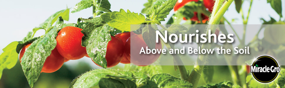 Nourishes Above and Below the Soil - Tomato Plants