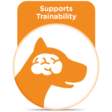 Supports Trainability