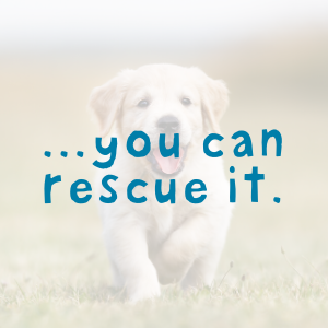 ...you can rescue it.