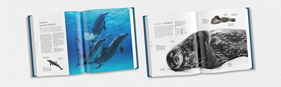 Oceanology, science of the ocean, ocean life, marine life, marine biology