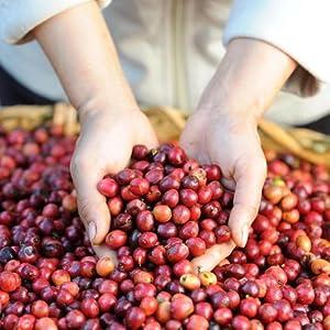 Sustainable, coffee, bean