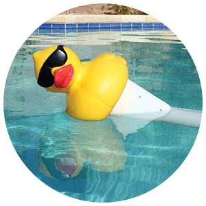Amazon Com Game 4002 Derby Duck 3 Inch Chlorine Five
