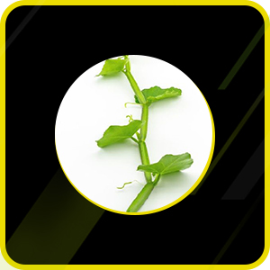 Strengthen your Body with Goodness of Herbs