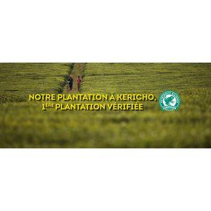 Rainforest Alliance, qu'est-ce que c'est concrètement ?