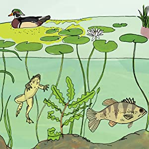 Nature Anatomy Ecosystem of a Pond