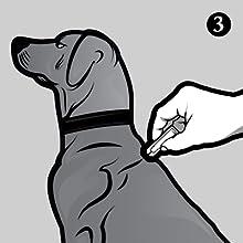 Place tube on dog