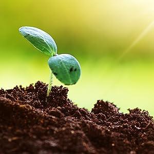 Plant Based Capsules