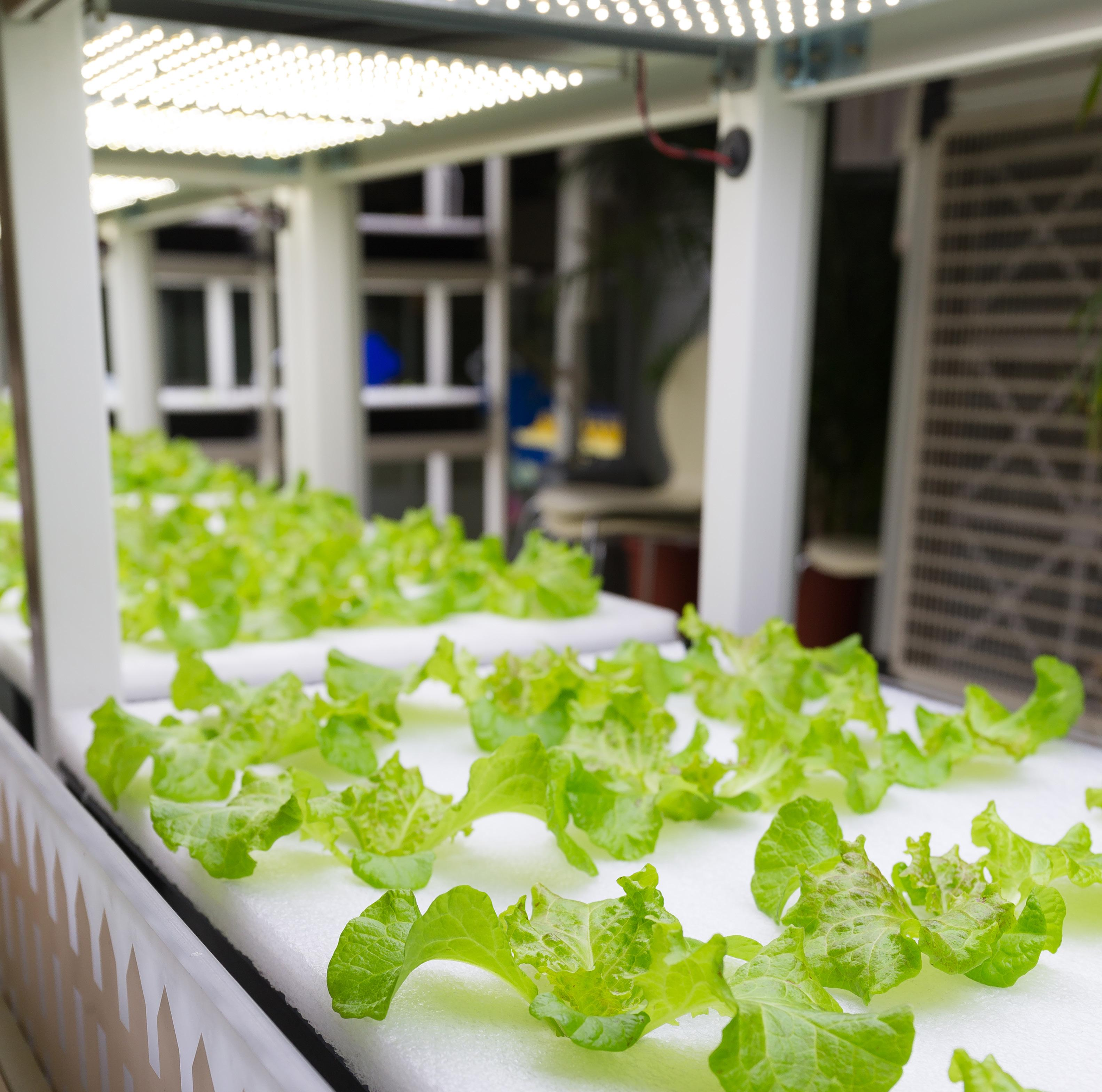 Diy Hydroponic Gardens How To Design And Build An