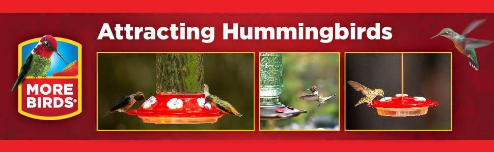 hummingbird feeder;bird feeder;bird seed;nectar;glass feeder;plastic feeder