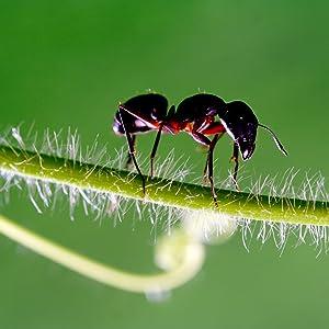 Amazon Com Terro 2600 Fba 2 Lb Perimeter Ant Bait Plus T2600 1 Pack Ant Posion Garden Outdoor