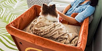 About Petique Our Story Background Dogs Cats Pet Product Great Quality