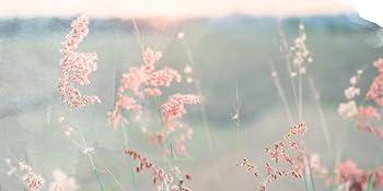 Field of flowers, pink flowers, finding gratitude