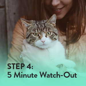 Keep the cat steady for about 5 minutes to allow the proper cap setting.