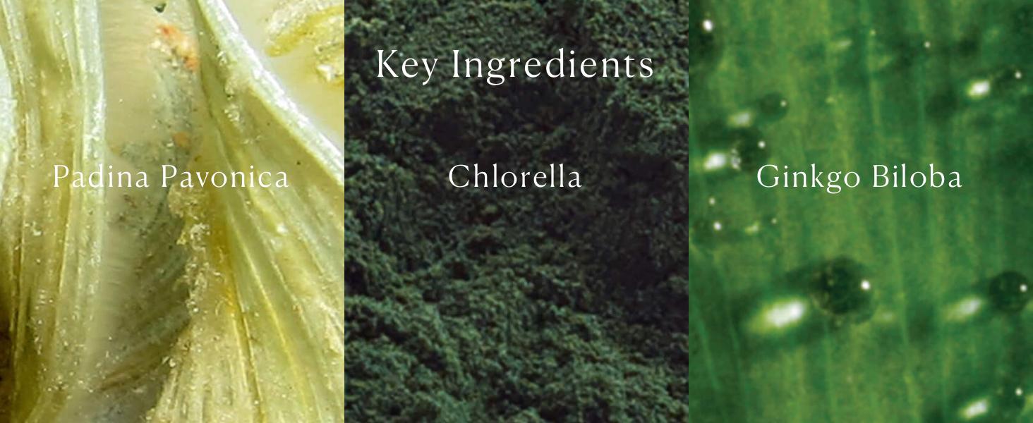 Pro-Collagen Marine Cream SPF30 Key Ingredients
