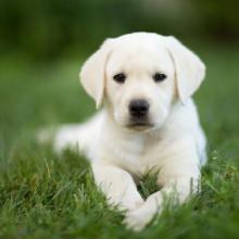 perro, gato, cuidado pelo, mascota proteger