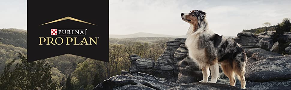 Dog standing on a cliff