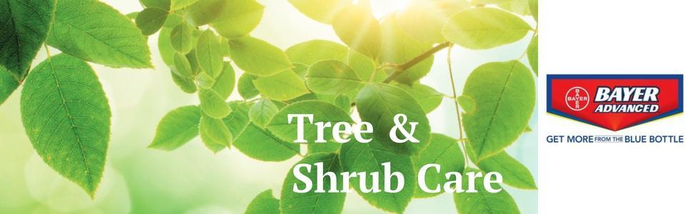 bayer, advanced, tree, shrub, disease, fertilizer, spikes, miracle gro, scotts, bioadvanced