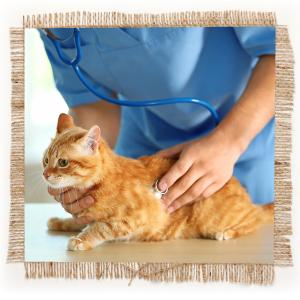 separation anxiety, stress, behavioral, feline, canine, supplements, calming, natural ingredients