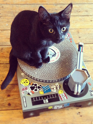 cat on scratching dj deck