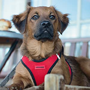 Dog in Voyager Step-In Air Harness