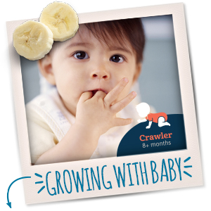 Gerber Fruit and Veggie Melts are perfect for babies who are learning to chew and self-feed.