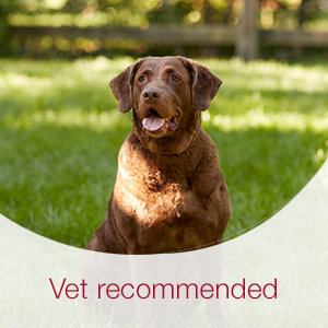 K9 Advantix II topical flea, tick and mosquito protection for dogs is recommended by veterinarians.