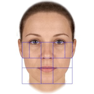proportions of fifty female faces
