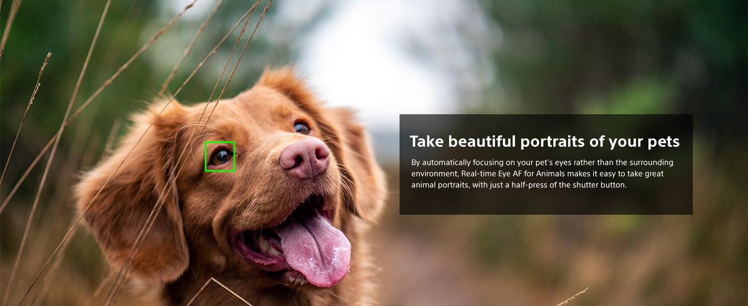 Real Time Animal Eye AF
