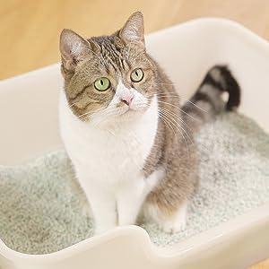 猫 観察結果