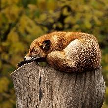 Schlafverhalte